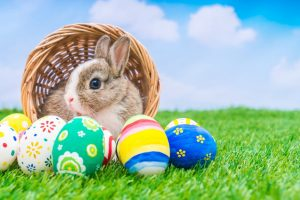 Camp Verde Community Easter Egg Hunt @ Haven of Camp Verde | Camp Verde | Arizona | United States