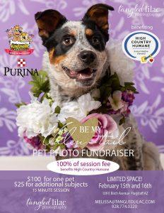 Valentails Pet Portrait Fundraiser @ 109 E Birch Avenue Flagstaff, AZ 86001