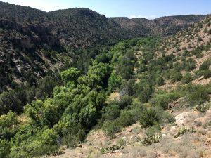 The Verde River: Aorta of the Mogollon Highlands @ Prescott Public Library